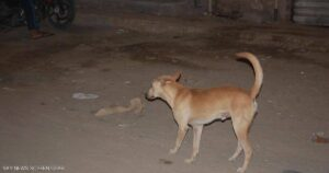 The law on the acquisition of dogs and dangerous animals in Parliament